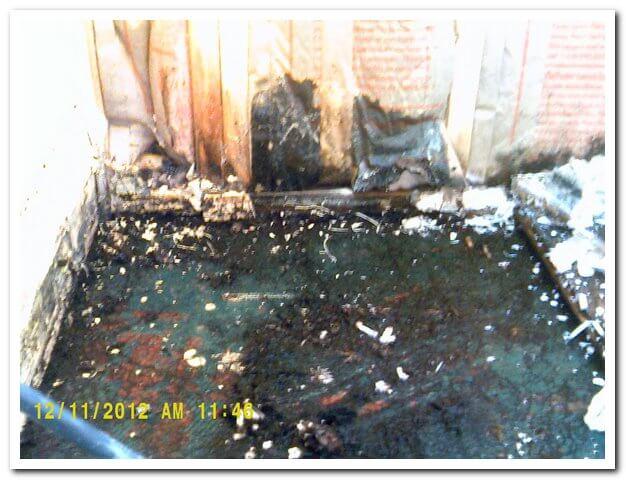 Black Mold on Floor