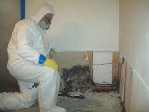 Mold Prevention Black Mold