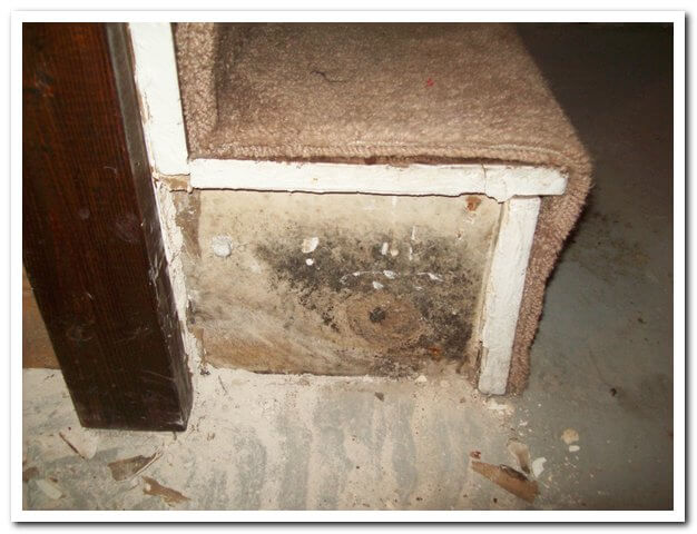 Mold Men, Pittsburgh black mold