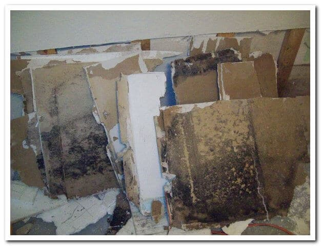 Mold Men, Pittsburgh Black Mold Removed