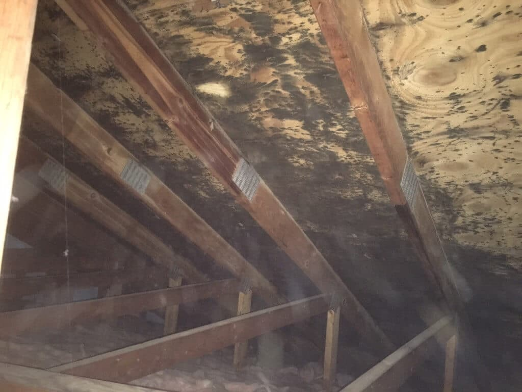 Mold Men, Pittsburgh Black Mold Attic