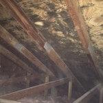 attic-mold
