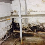 basement-mold