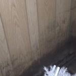 mold-on-wall